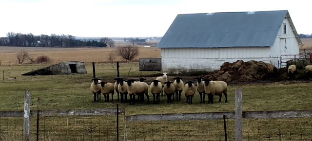 digital marketing herd